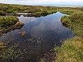 Bog pool near summit of Slieu Dhoo. Isle of Man - geograph.org.uk - 31660.jpg