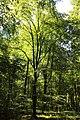 Bois de la Louvière - Livierenbos, Flobecq - Vloesberg 09.jpg