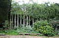Border and trellis Clavering Essex England.jpg
