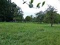 Bornem Brandheide 38 Hoogstamboomgaard (3) - 230217 - onroerenderfgoed.jpg