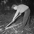 Bosbewerking, arbeiders, boomstammen, gereedschappen, Bestanddeelnr 251-9116.jpg