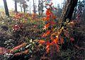 Bosque de Cecebre - panoramio - Javier Branas.jpg