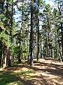 Bosque de Oma (12).JPG