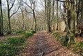 Bridleway through Green Wood (4) - geograph.org.uk - 1252959.jpg