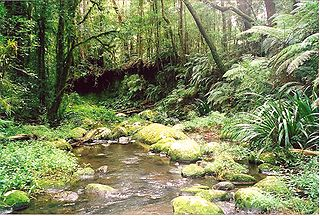 Border Ranges National Park Protected area in New South Wales, Australia