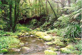 Border Ranges National Park - Brindle Creek in the Border Ranges National Park is an impressive rainforest stream.