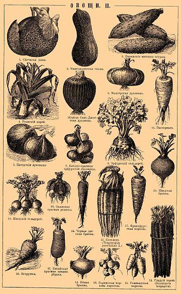 Овощи Википедия Овощи Иллюстрация из Энциклопедического словаря Брокгауза и Ефрона