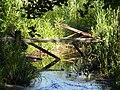 Broken bridge duckboards symbol path of life.jpg