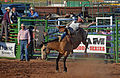 Bronc Riding, Thermopolis WY.jpg