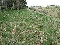 Brouncker's Down, Wiltshire - geograph.org.uk - 762018.jpg