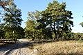 Brunssummerheide P1310862.jpg