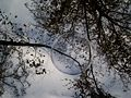 Bubble against trees and sky.JPG