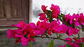 Bunga kertas (16).jpg