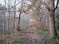 Burnham, Dorney Wood - geograph.org.uk - 1047093.jpg