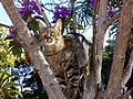 CAT in a tree in the morning.jpg