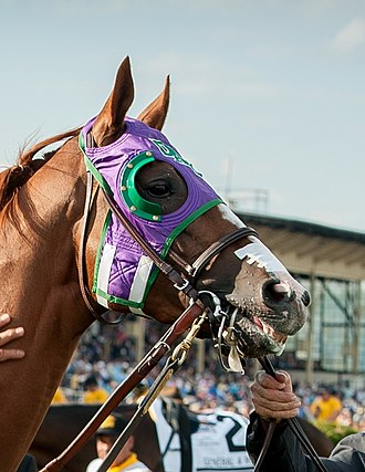 Blinkers (horse tack) - American race horse wearing a blinker hood.