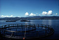 CSIRO ScienceImage 2514 A Salmon Farm in Tasmania Australia.jpg