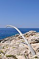 Cala Degli Inglesi - Isola di San Domino - Tremiti (FG) Italia - 19 Agosto 2013 - panoramio.jpg