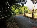 Caminho após a ponte do Córrego Ribeirão Preto, ao fundo uma Paineira (Ceiba speciosa) - panoramio.jpg