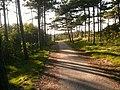 Camping trail - panoramio.jpg