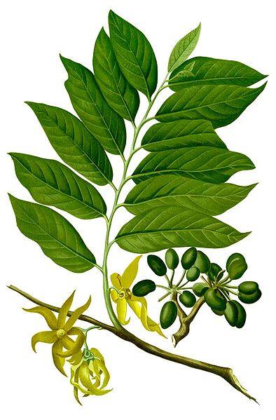 anti puce naturel huile essentielle