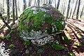 Caparazón de granito con musgo (45721340235).jpg