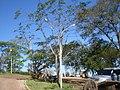 Carro de boi Chapada MT BR - panoramio.jpg