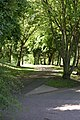 Castle Grounds Pathway (2) - geograph.org.uk - 1400356.jpg