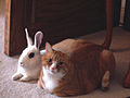 Cat and rabbit sitting together.jpg