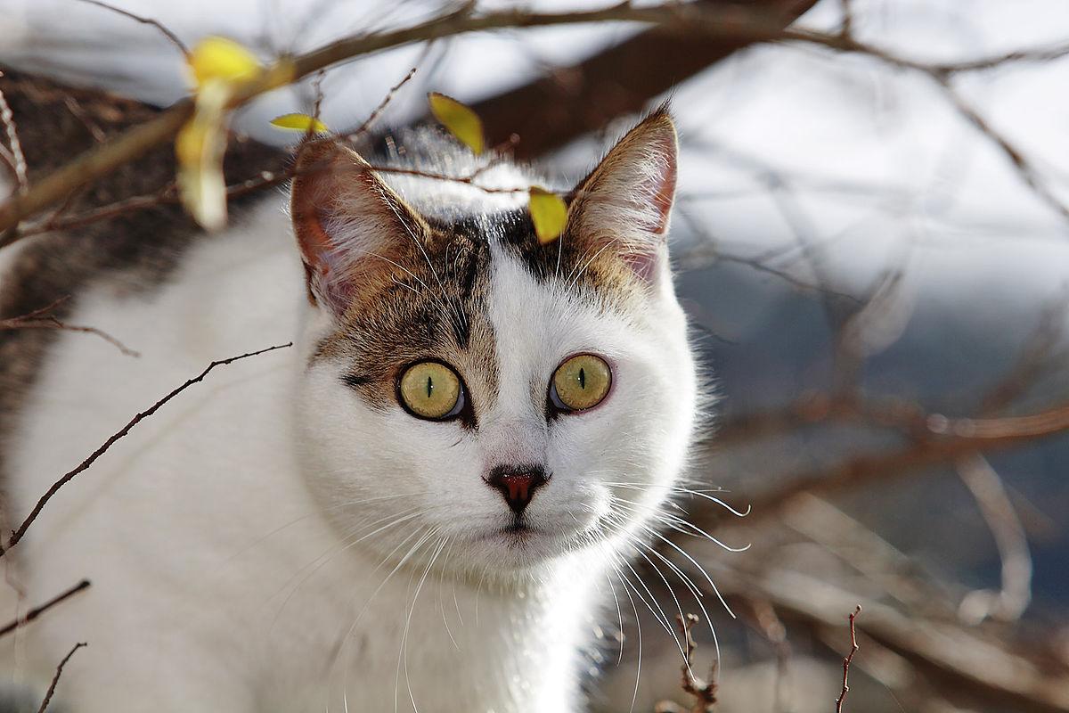 Treetop Cat Rescue Season