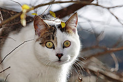 Cat in tree02.jpg