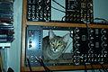 Cat modular synthesizer.jpg
