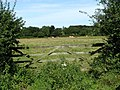 Cattle grazing near Boundary Farm - geograph.org.uk - 538524.jpg