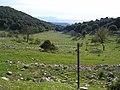 Cese di Monte Romano.jpg
