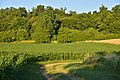 Champs de maïs le long du bois (29917920850).jpg