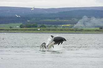 Chanonry Point - Image: Chanonry Point 2005 05