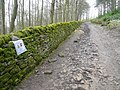 Chatsworth Park - Path through New Piece Wood - geograph.org.uk - 766402.jpg