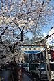 Cherry blossom 2011 (5640983321).jpg