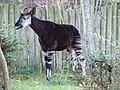 Chester Zoo (8198161252).jpg