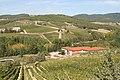 Chianti vineyard with harvest activity.jpg