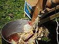 Chicken dead 2.JPG