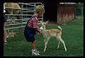 Child bottle-feeding baby deer, Alabama Big Cats Safari Adventure (MSA) (5788523019).jpg