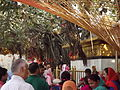 Chintpurni Devi (2).JPG