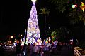 Christmas Tree & Honolulu Hale (5288750203).jpg