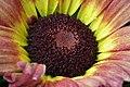 Chrysanthemum from lalbagh7244.JPG
