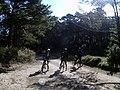 Ciclistes per pista a Els Ports 02.jpg