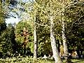 Cintorín SNP - panoramio.jpg
