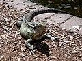 Citi Botanic Gardens.Iguana.Brisbane.Брисбен. Городской ботанический сад.Игуана. - panoramio.jpg