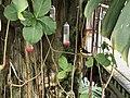 Cleveland Botanical Garden Bird.jpg