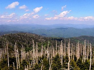 Southern Appalachian spruce–fir forest - Dead Fraser fir trunks on the slopes of Clingmans Dome